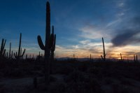 I liked the cacti and the sunset in case you can't tell