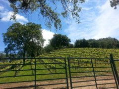 The lovely vineyards of Paso Robles