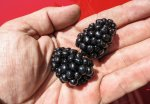 Mutant blackberries