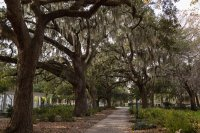One of the paths at Forsyth Park